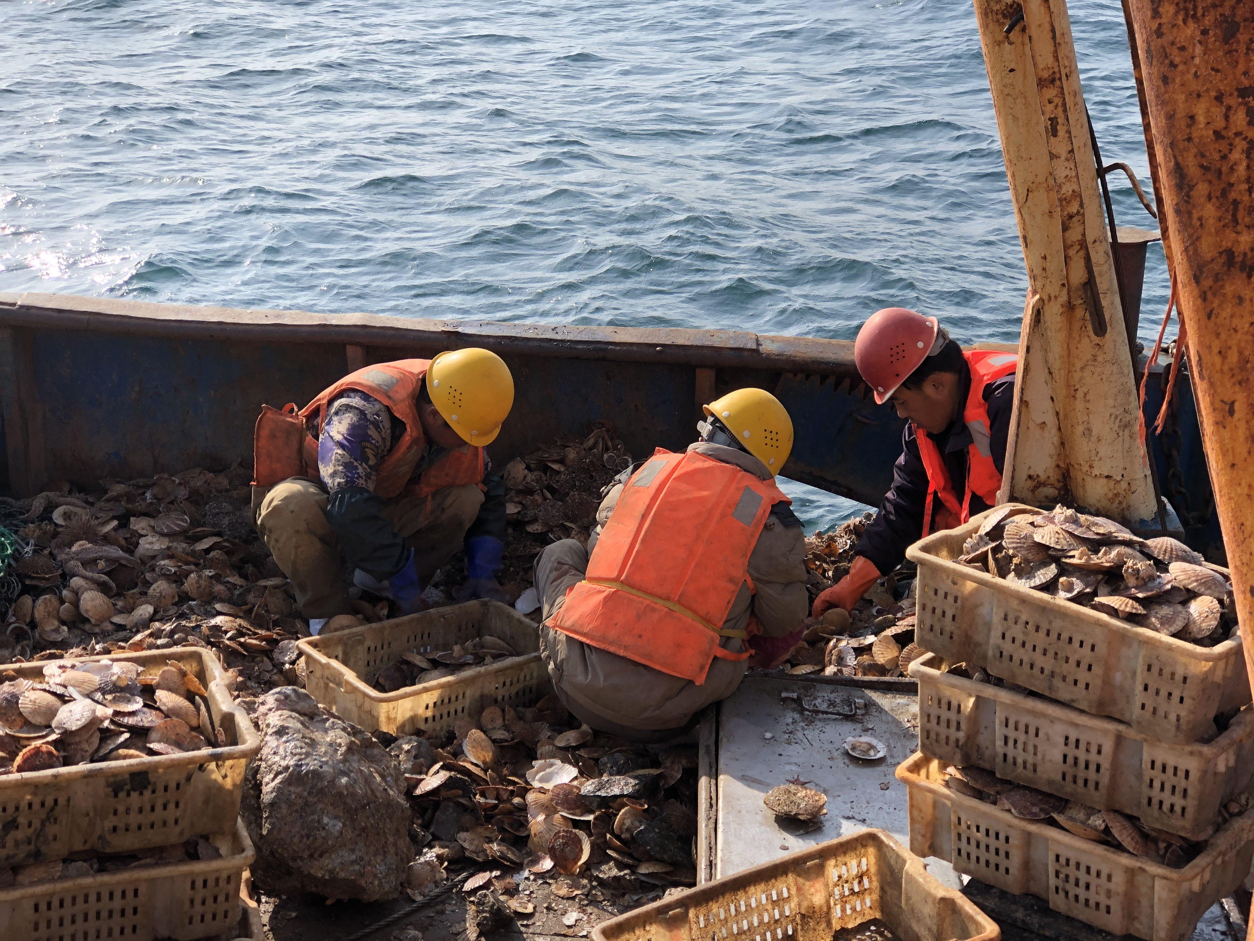 獐子岛自证清白遭岛民质疑:临近的岛扇贝收成良好