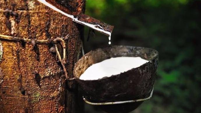 """调查:国内橡胶长期成本倒挂,""""一杯橡胶水售价不如矿泉水"""""""